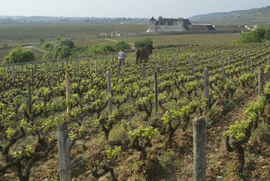Clos Vougeot in the distance