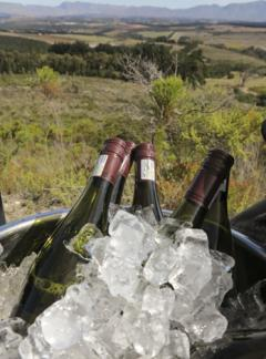 Elegant Elgin picnic with Paul Cluver Wines