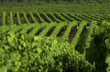 Cahors vineyards © Cahors wines