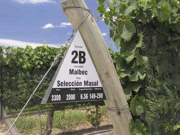 Cahors now copies Argentina, using the name malbec instead of cot or auxerrois