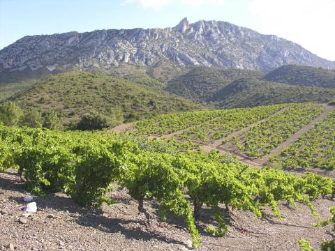 The Old Vine Grenache