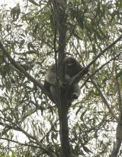 In the trees outside Barratt