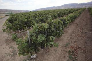 Vinkara ©Wines of Turkey